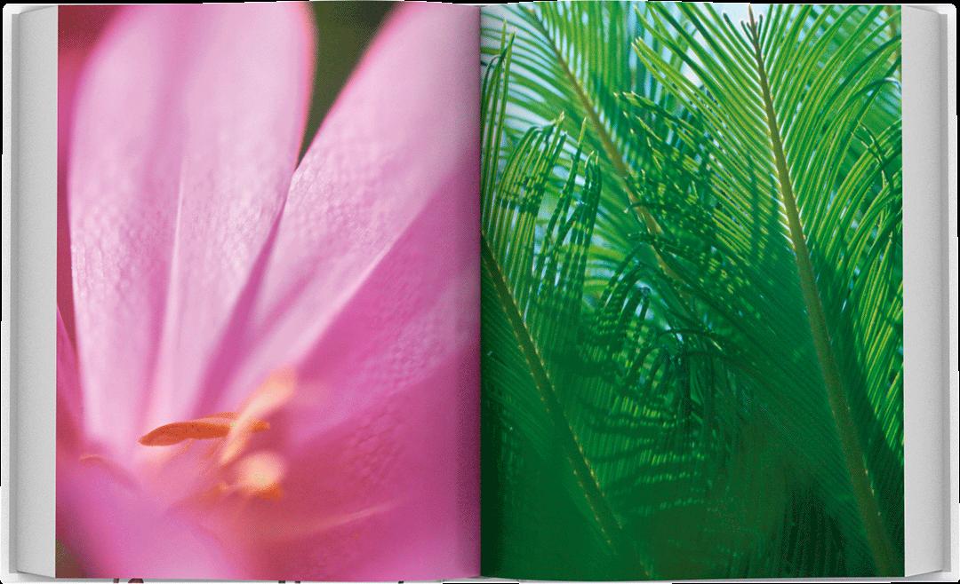 dea-flora-spread-02