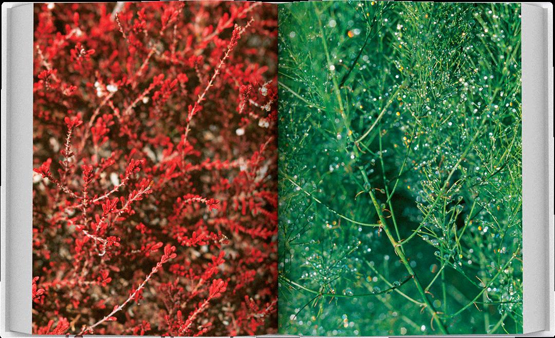 dea-flora-spread-03