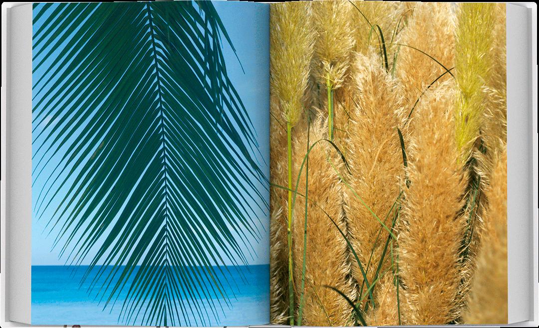 dea-flora-spread-06