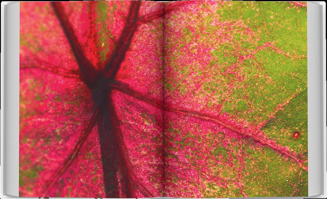 dea-flora-spread-07