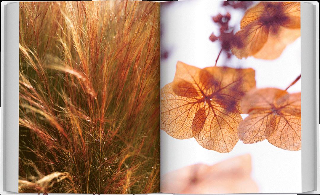 dea-flora-spread-09