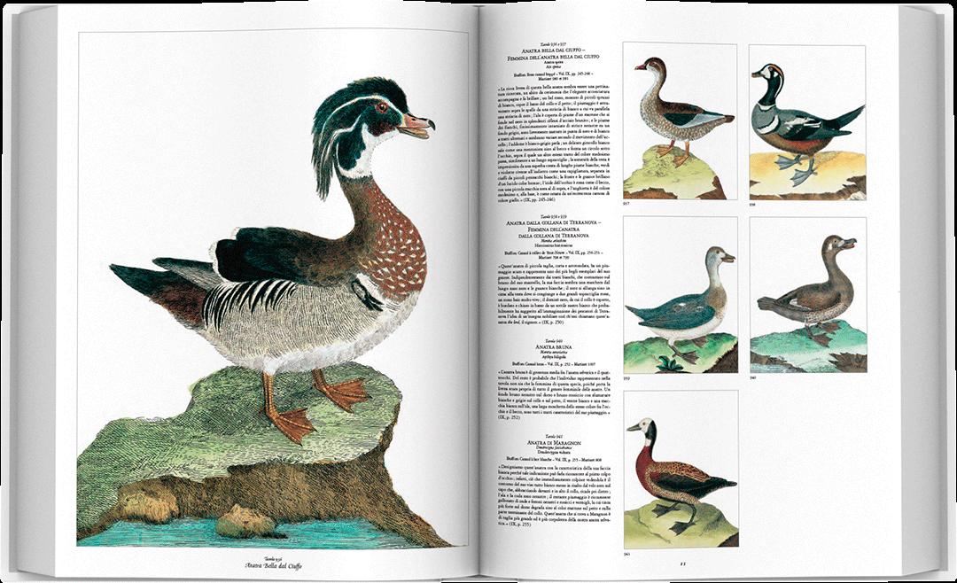 storia-uccelli-spread-05