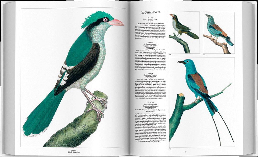 storia-uccelli-spread-06