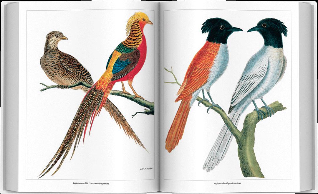 storia-uccelli-spread-07